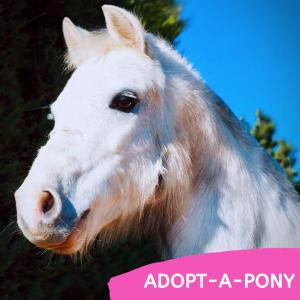Adopt-a-Pony
